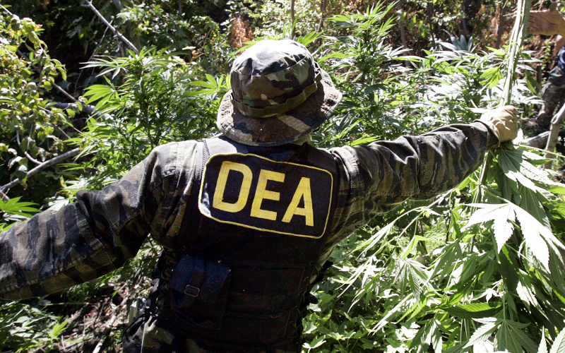 If you were given to choice whether or not to fund the DEA's war on marijuana, would you do it?