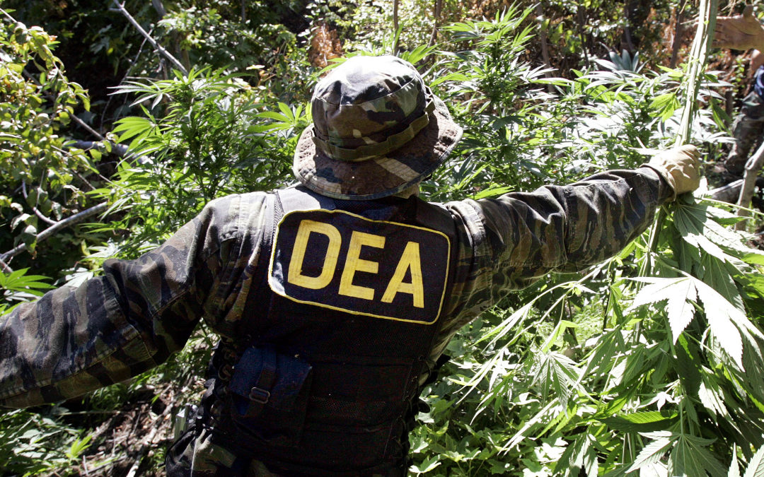 If the Feds Come for Your Legal Marijuana, Defund the DEA